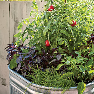 It's soo Easy to Grow Veggies